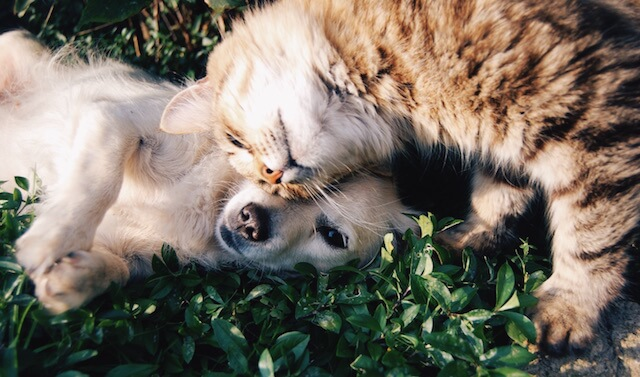 This cat and dog duo are the cutest cuddle buddies ever.