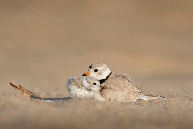 cuddle buddy birds