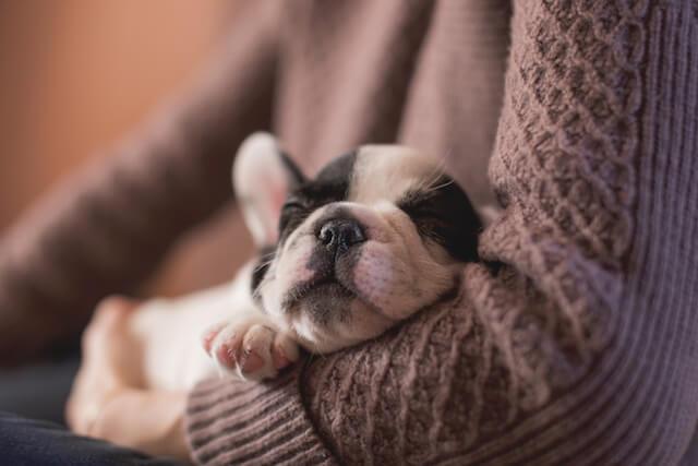 puppy cuddle buddy