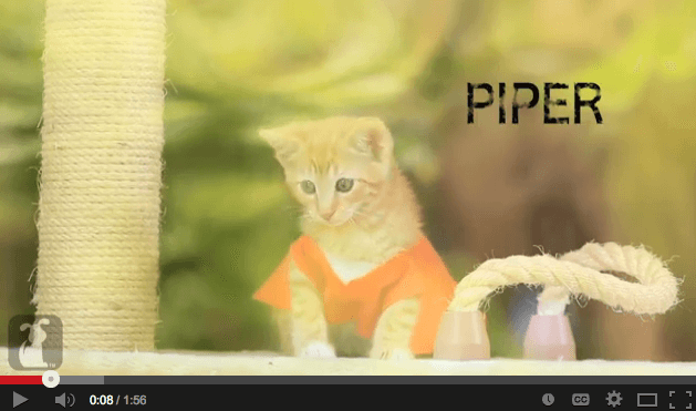 The Daily Procrastination: Orange is the New Cat? (VIDEO)