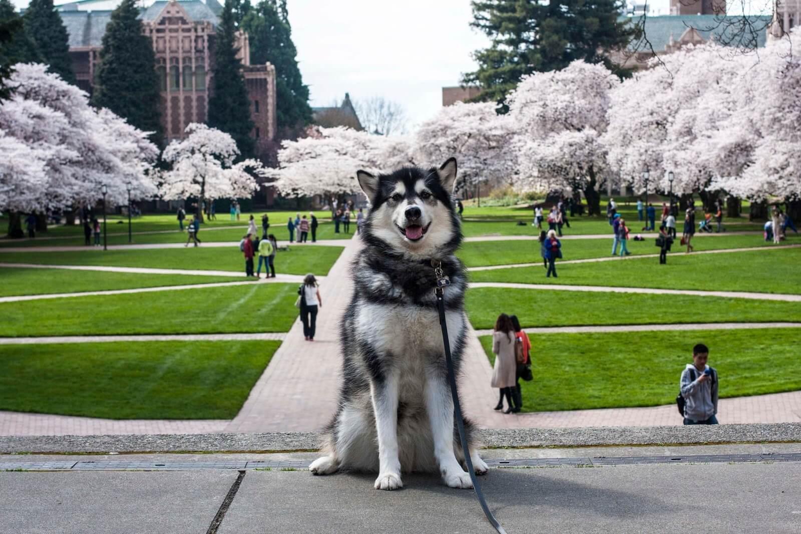 University of Washington - Magazine cover