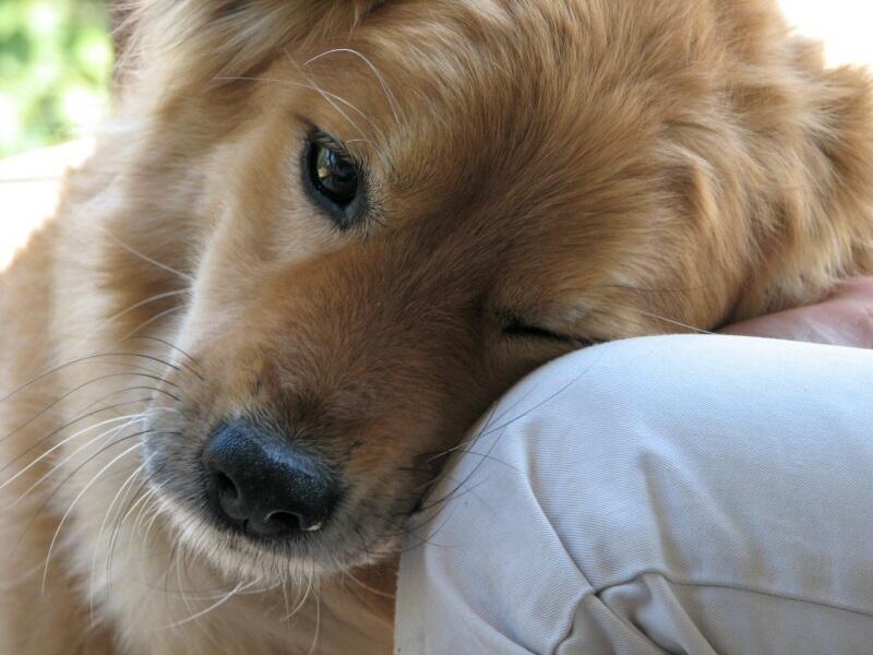 Dog's_Love