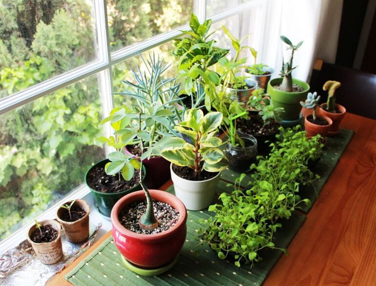 vastu_plants_for_home-770x586