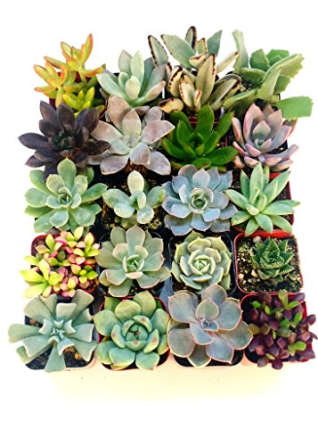 Succulents Boom With Popularity Because They Donu0027t Require Too Much Effort.  U201cSucculents Are Great Because They Will Survive Without Water For A Month,u201d  Said ... Part 39
