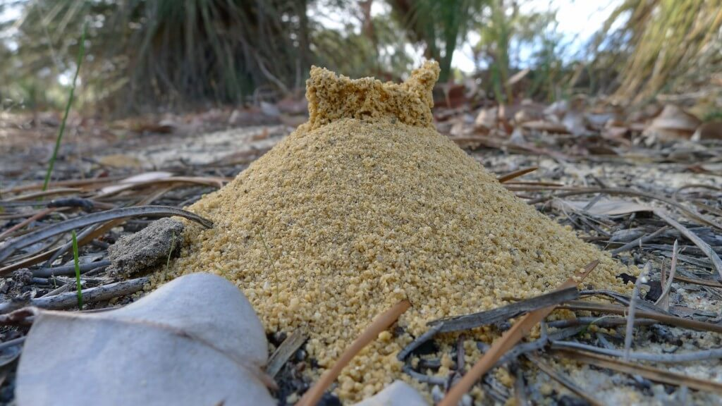 Good luck with the fire ants on Eckerd's campus.