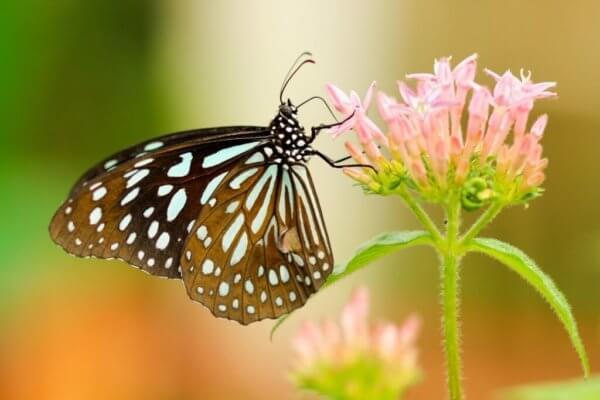 Gainesville Events: Butterfly Rainforest
