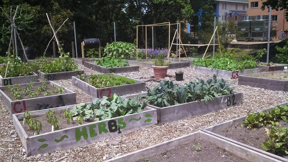 American University Community Garden