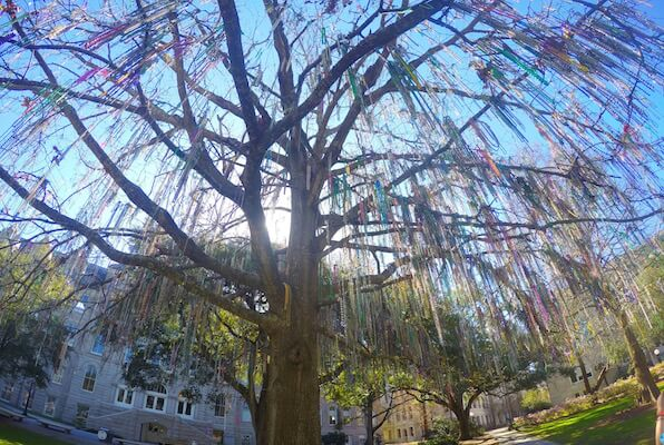 Bead Tree in Tulane University in New Orleans