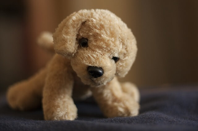 stuffed dog what to bring to college