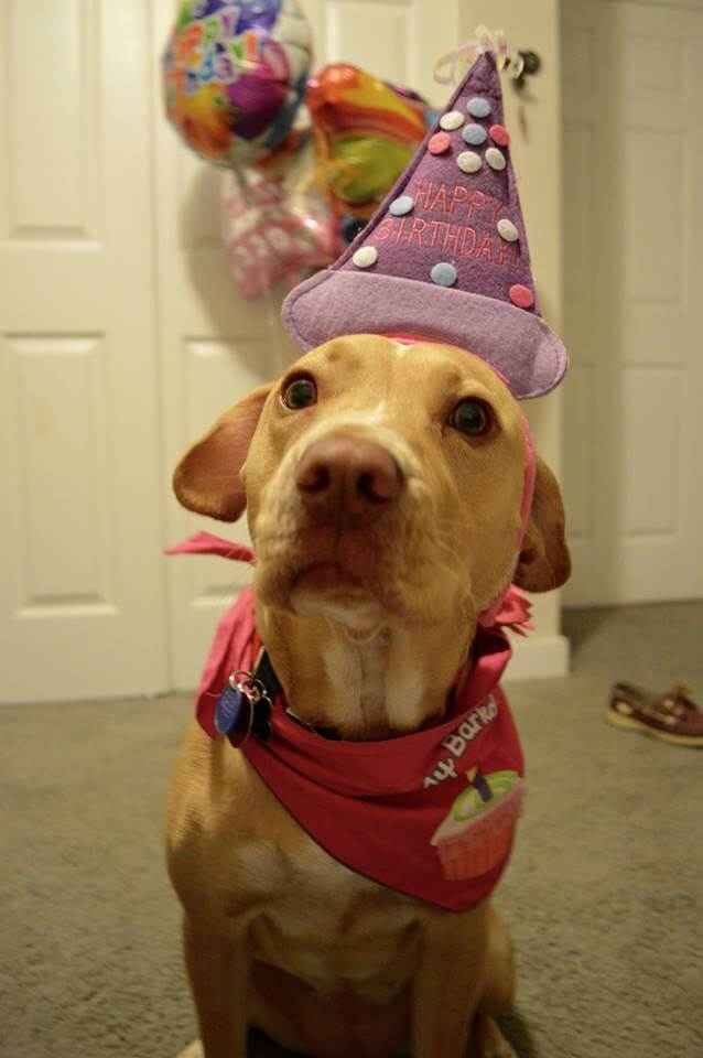 birthday funny dog pictures