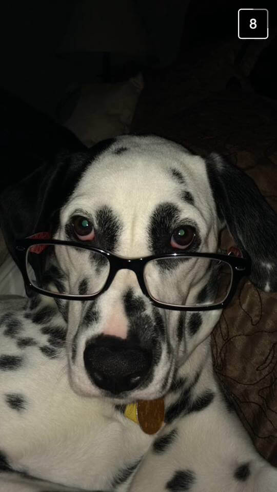 glasses funny dog pictures