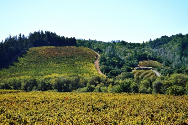 things to do in Sonoma vineyard
