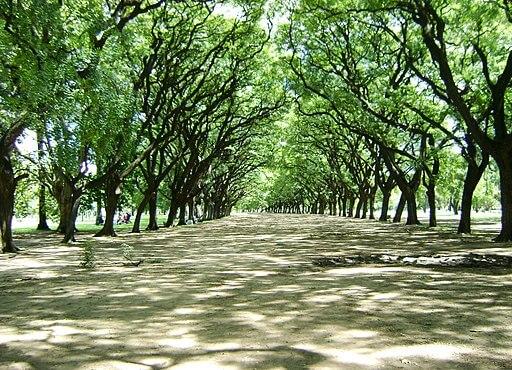Pathway in Bosques de Palermo