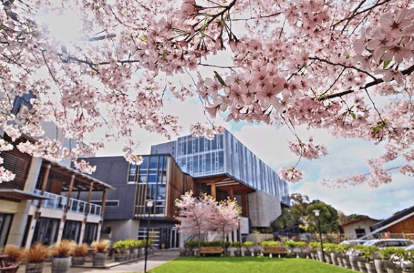 flowers, campus, Wellington, New Zealand, Massey
