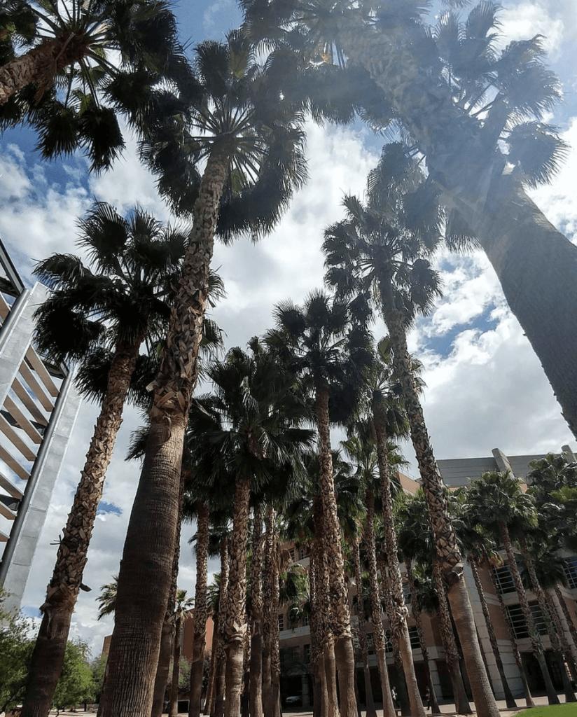 university of arizona luxurious campus