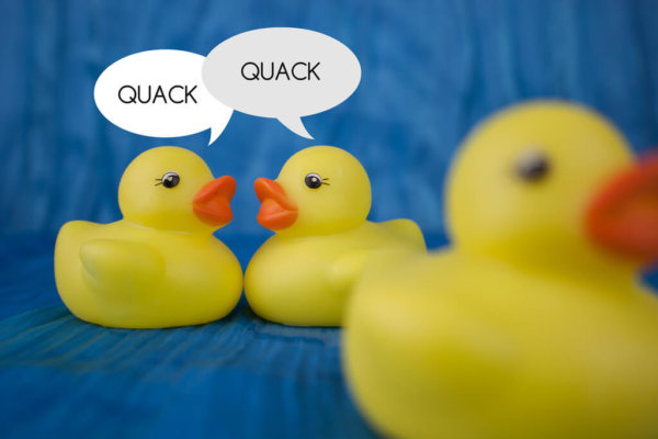 gossiping ducks