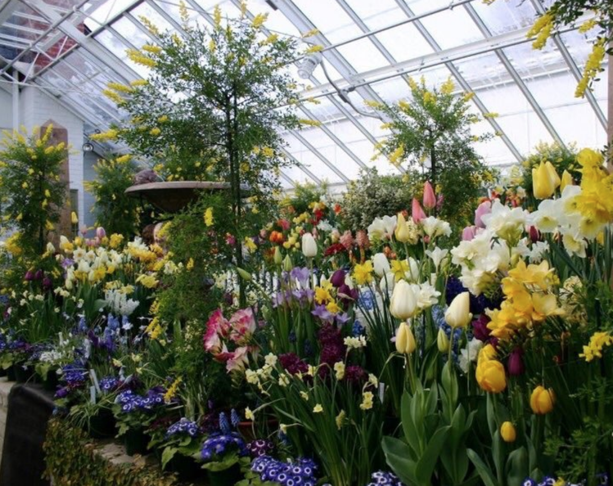 Northampton garden