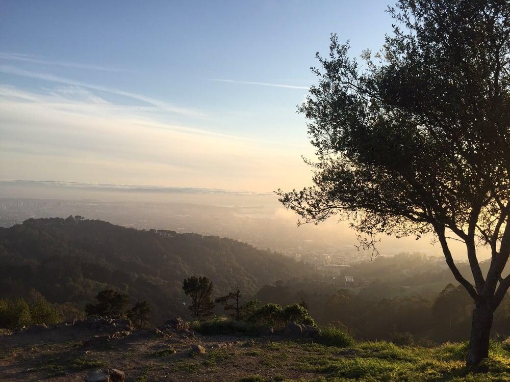 berkeley landscape