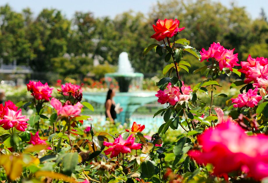 rose garden things to do in san jose