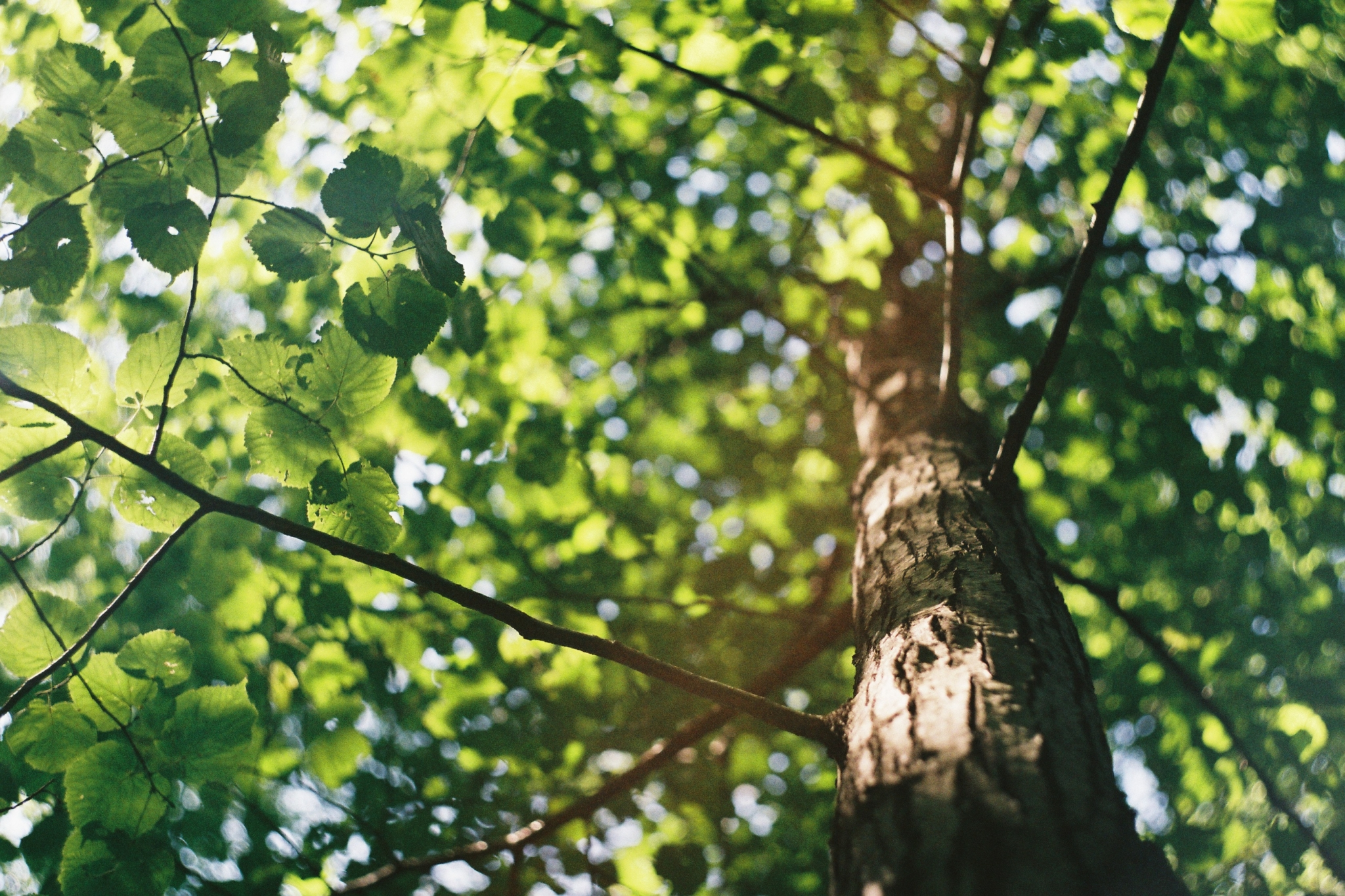 grove columbus