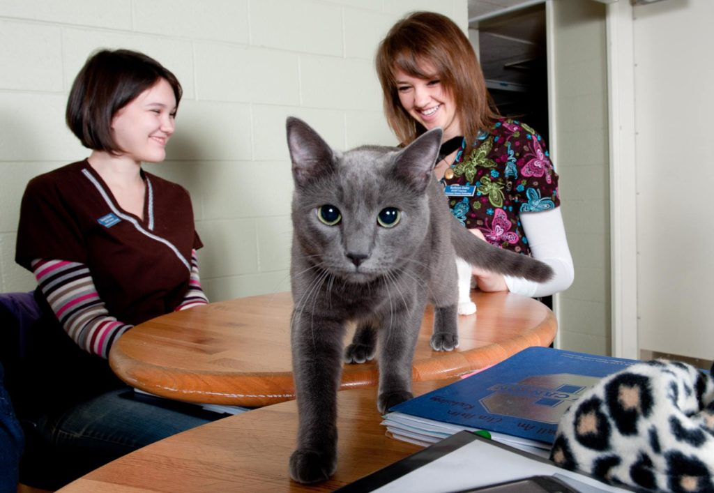 cat on study table suny canton pet friendly colleges