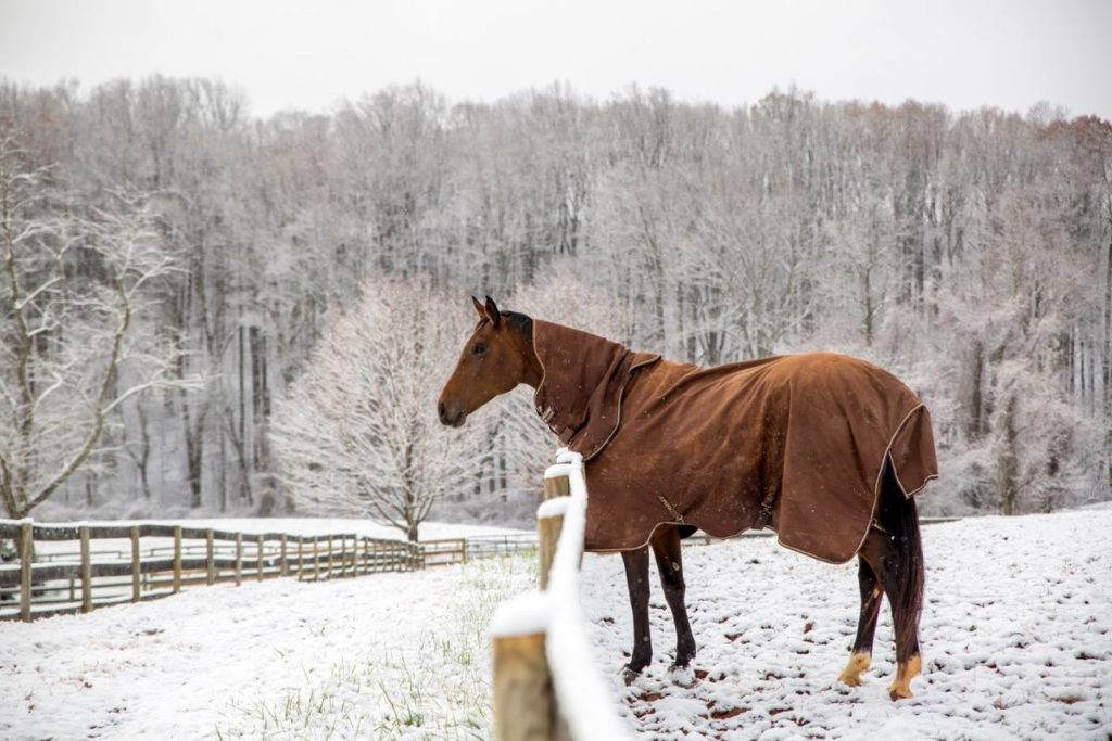 horses in snow sweet briar pet friendly colleges campus