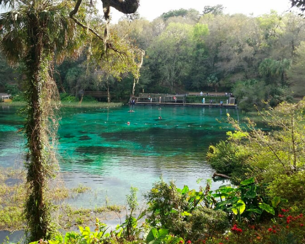 rainbow springs gainesville day trips