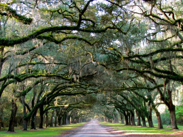 tunnel of trees things to do in savannah