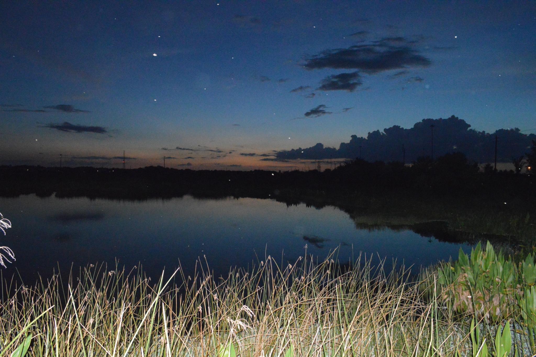 swamp night sky things to do in sarasota