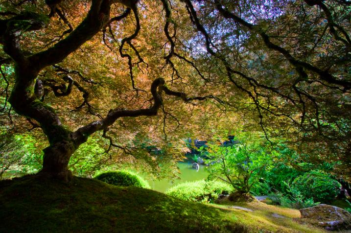green garden portland