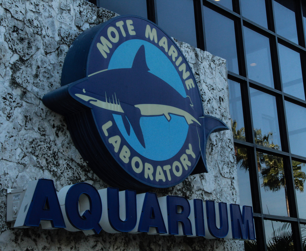 mote marine lab aquarium things to do in sarasota