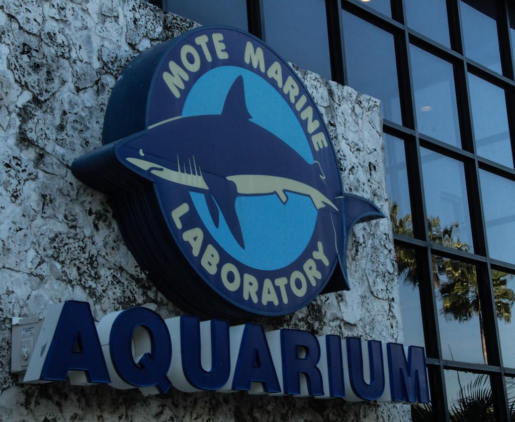 mote marine lab aquarium things to do in sarasota
