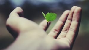 leaf growing in hand working at google