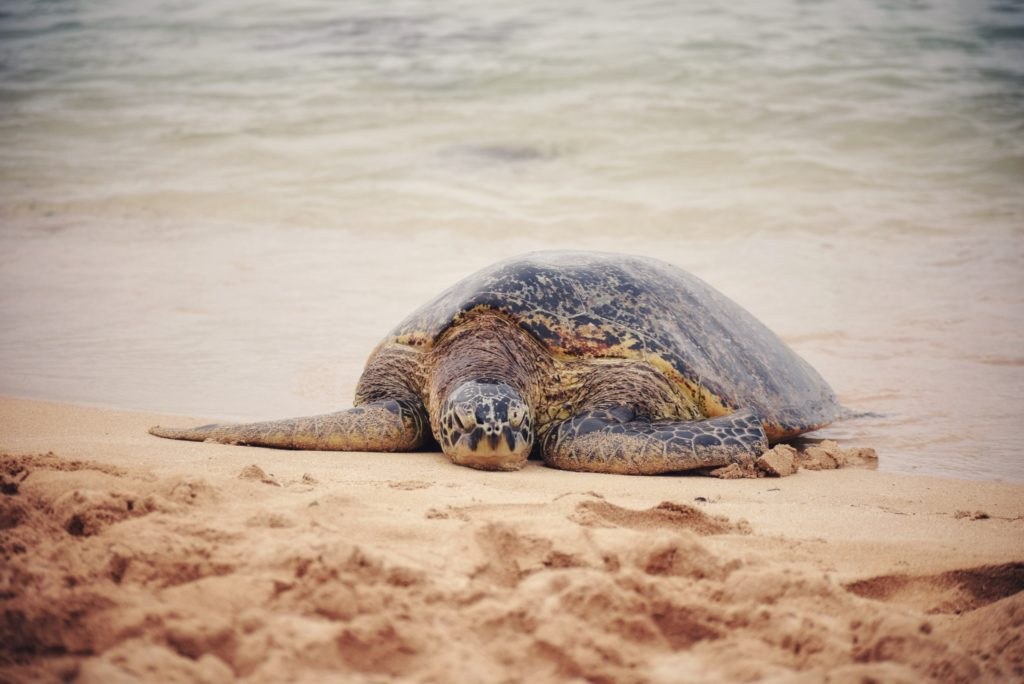 sea turtles things to do in palm beach
