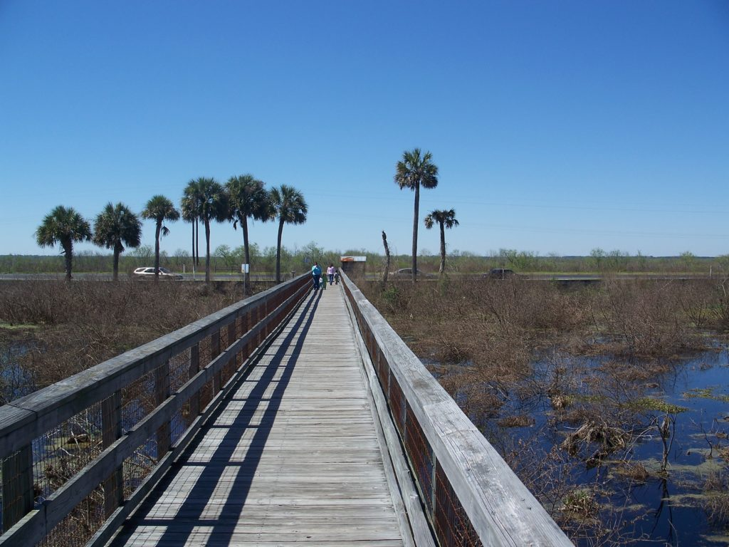 boardwalk on marsh
