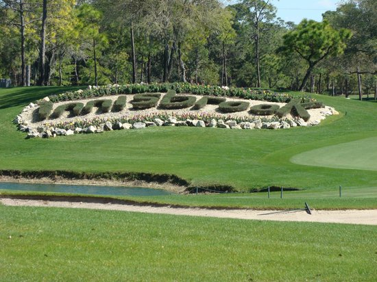innisbrook golf things to do in clearwater