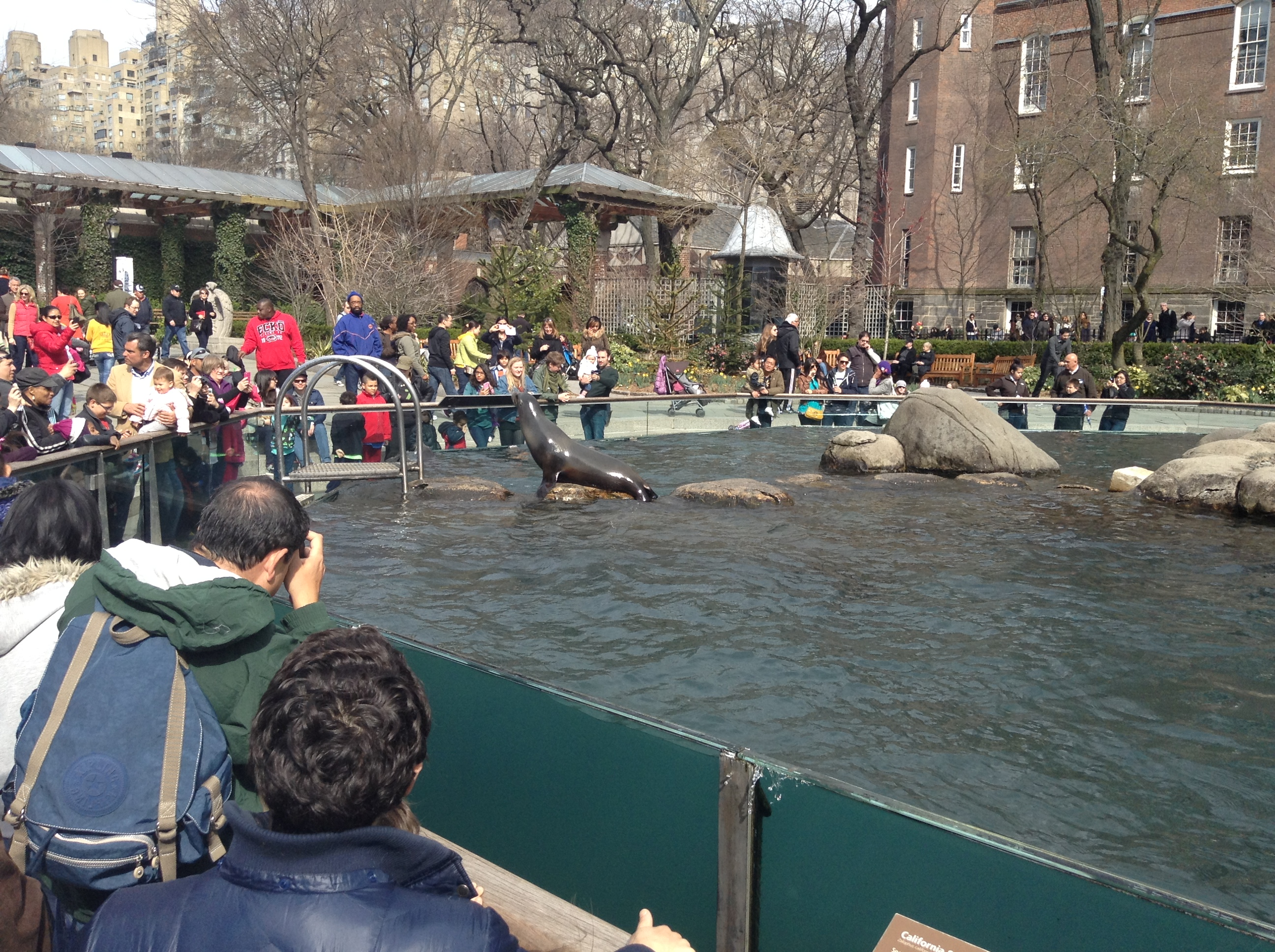 central park zoo things to do in midtown