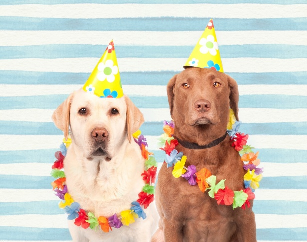 dogs in party hats 21st birthday ideas