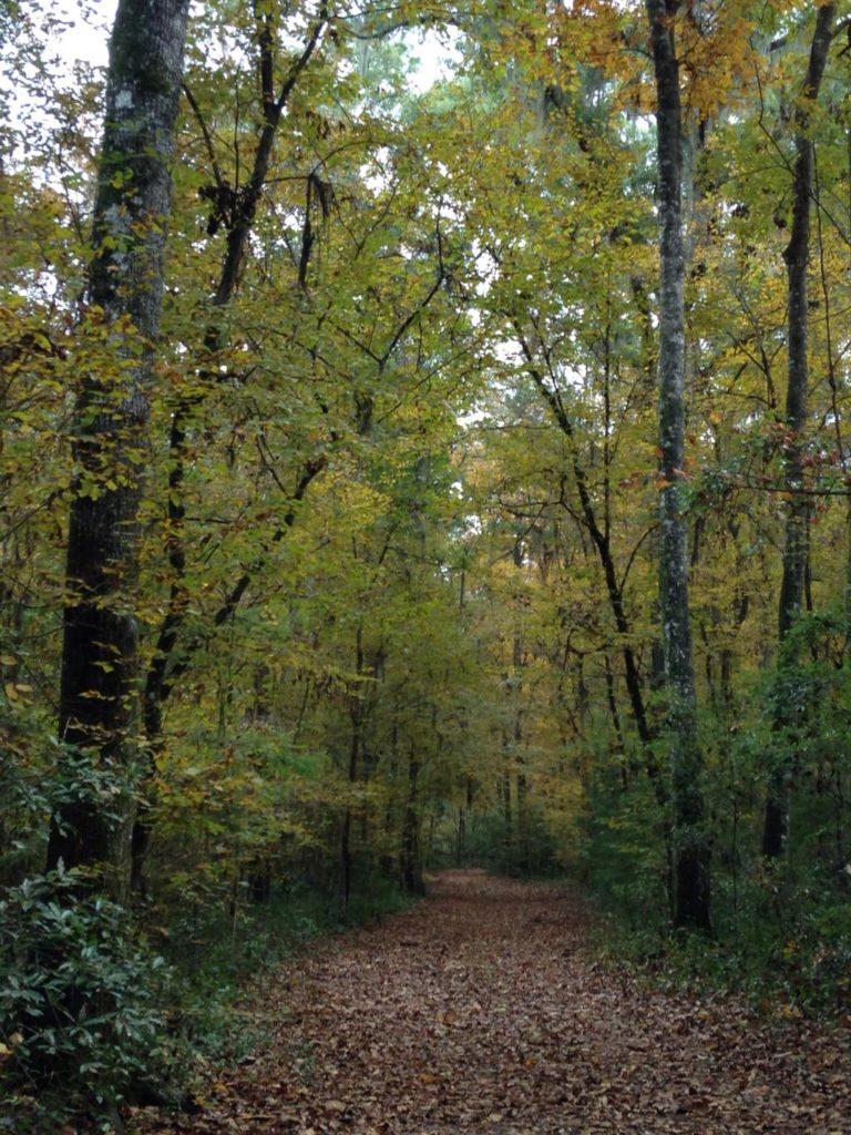 san-felasco-trail