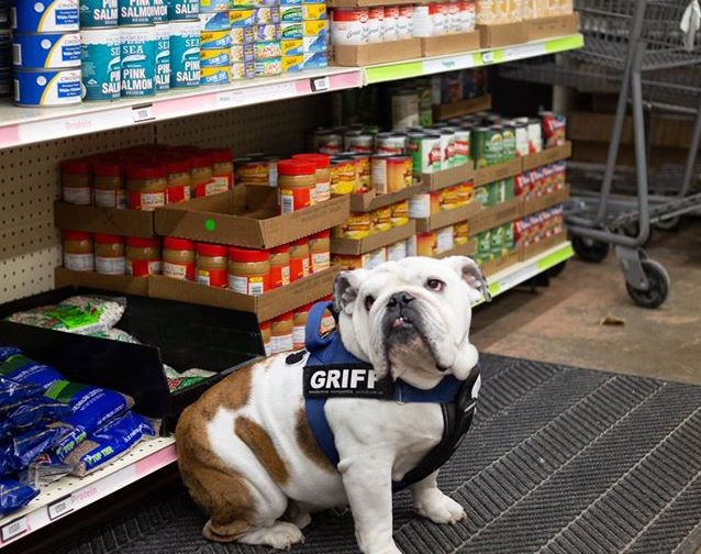 The Drake mascot, Griff, sits in the aisles of the IMPACT food pantry.