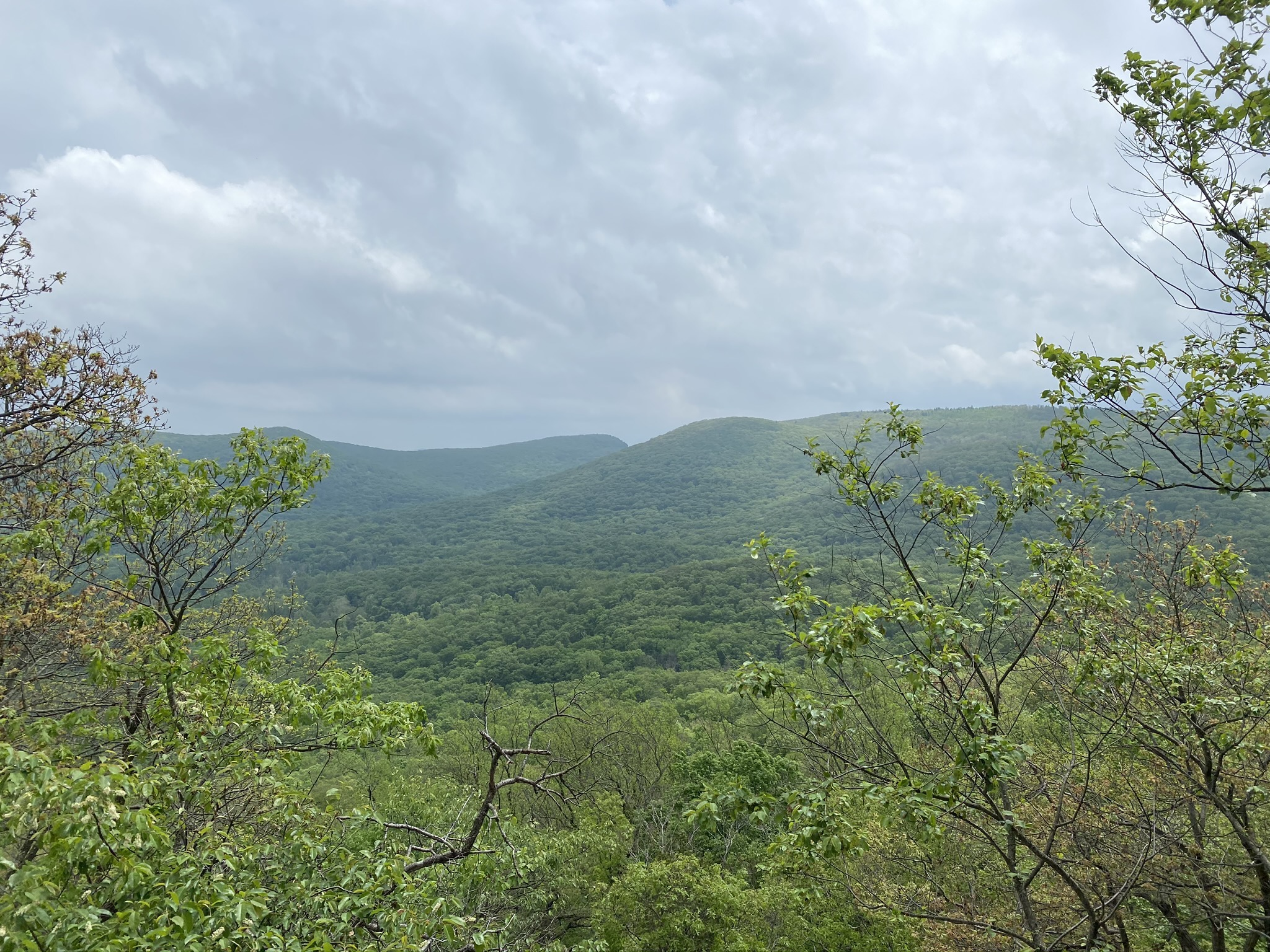 bear mountain and trees