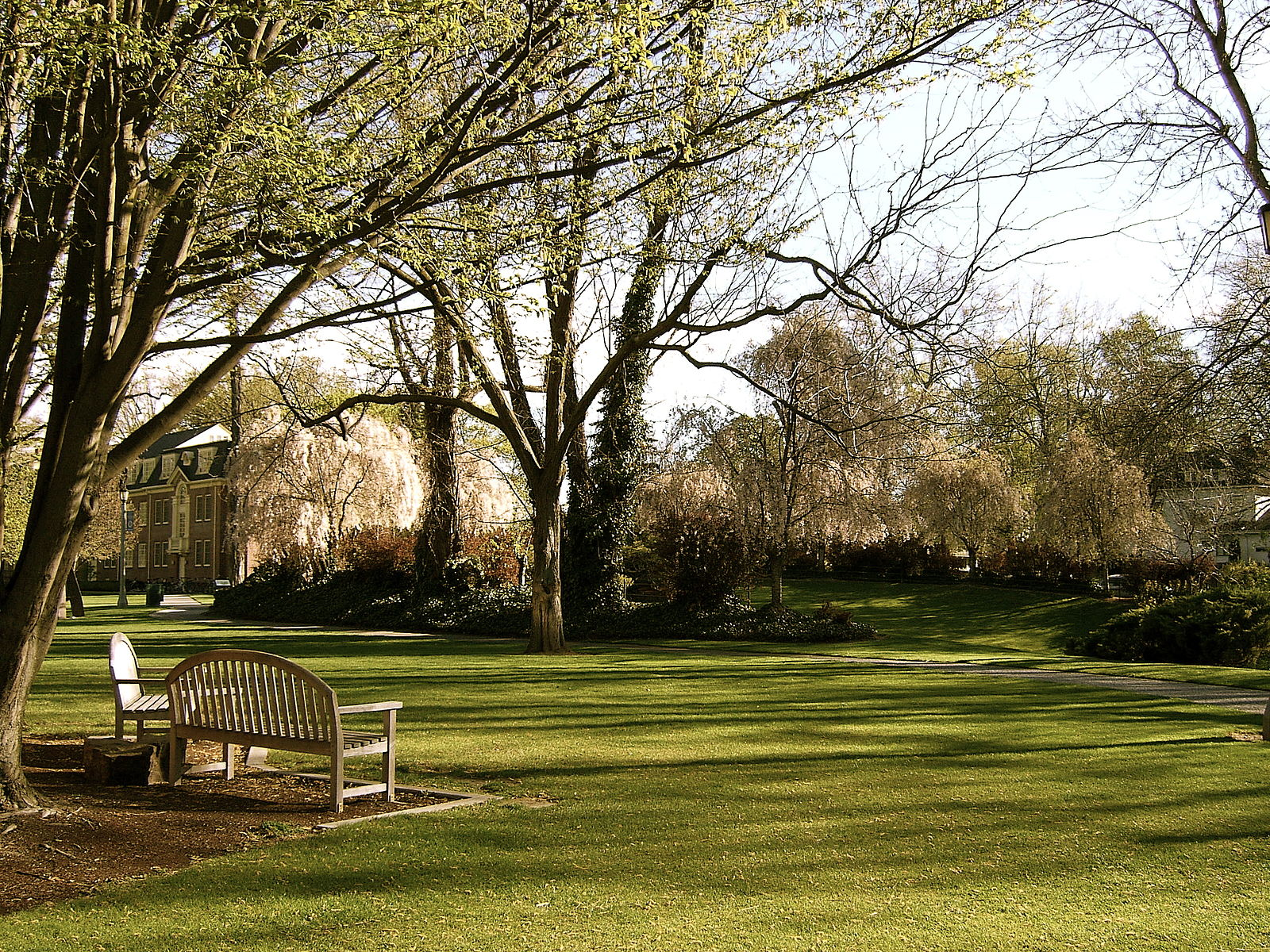 Whitman college field with a bench and trees
