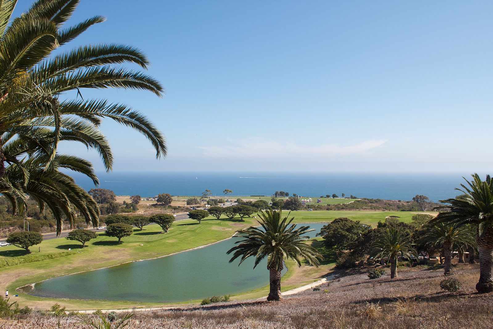 ocean and palm tree view at Pepperdine
