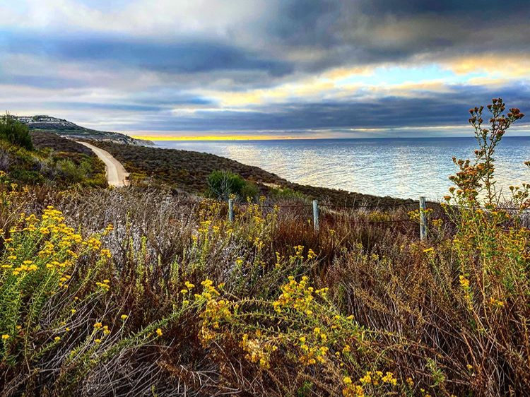 hiking trail along the coast with the ocean in the background and flowers in the foreground
