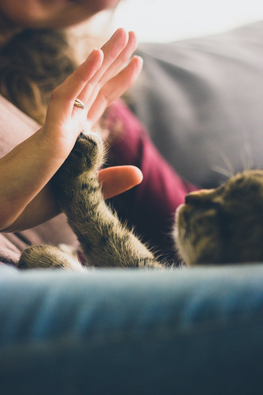 Animal paw touching a woman's hand