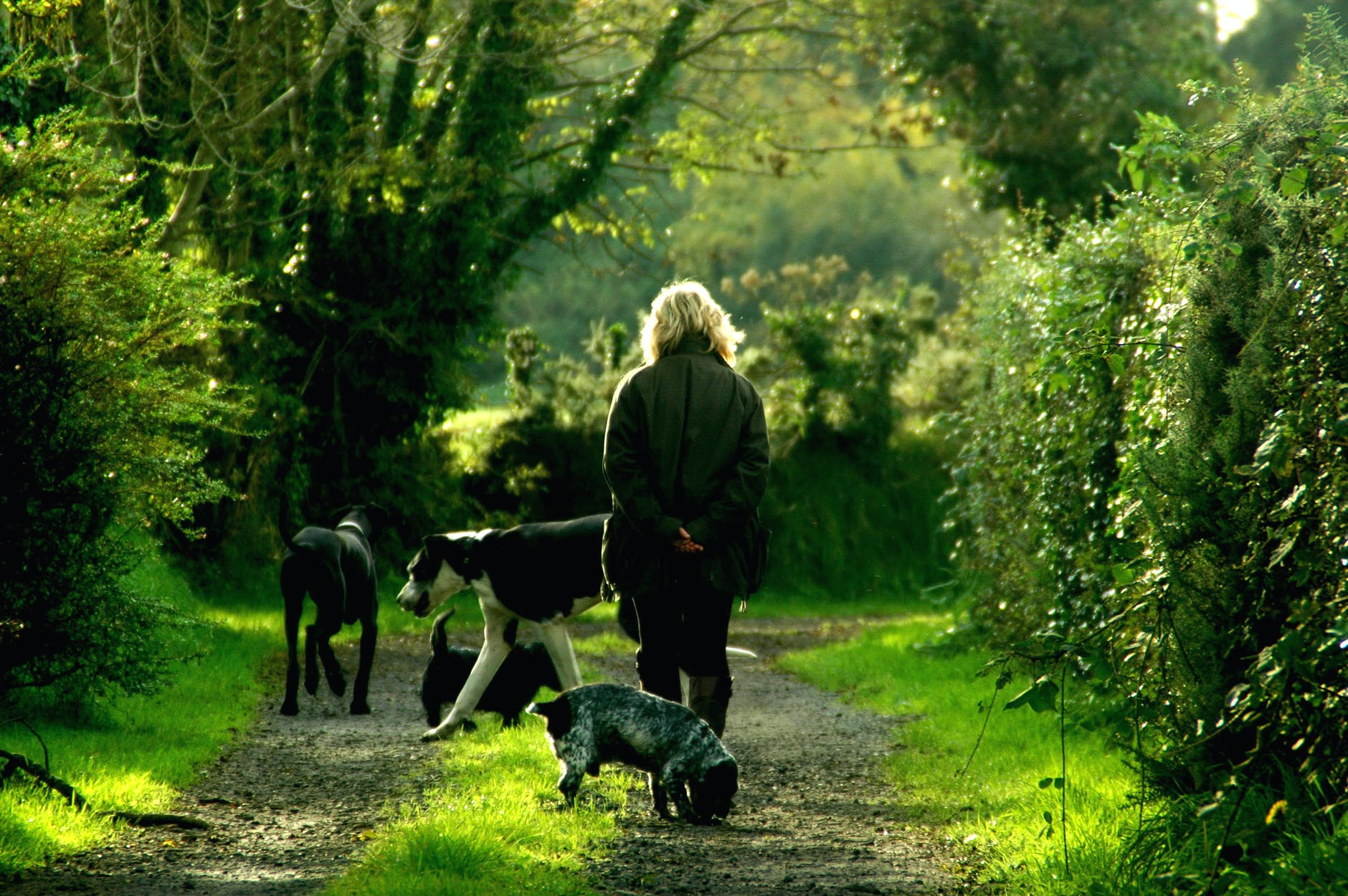Woman walking with animals outside